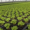Herbs, Perennials, Bedding Plants - Applied Bio-nomics