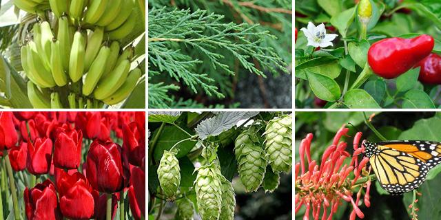 international-crops